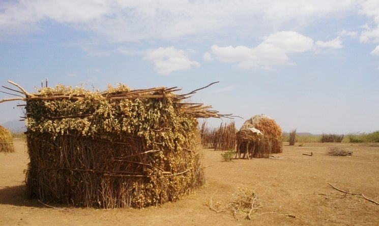 Grass homes made by local house-building experts